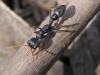 青島市税関はオーストラリアから送られたパッケージの中で生きているアリとその卵を発見しました