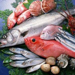 Documents for fish under the new regulations
