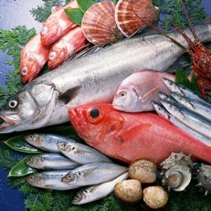 新しい規制の下で魚のための文書