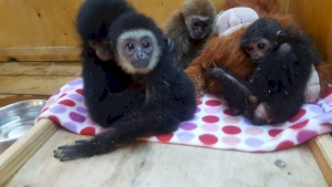 Ural guest hid monkeys from customs under the guise of cats