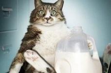 Harga seragam susu