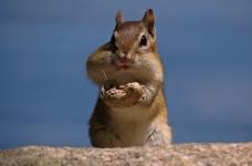 アメリカのピーナッツは禁止の下に来ました