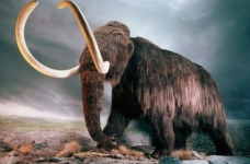FSB of Primorye prevented the export of a record batch of mammoth tusks from Vladivostok
