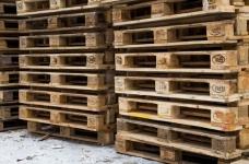 Внимание сосновая древесная нематода