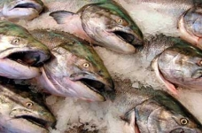 Dans le RZD il y a une augmentation du transport du poisson de l'Extrême-Orient