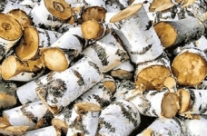 Устанавливаются ограничения на экспорт березовых бревен из России